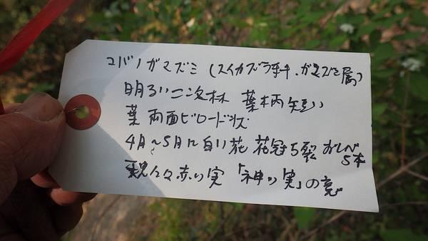 rs_RIMG9978.jpg
